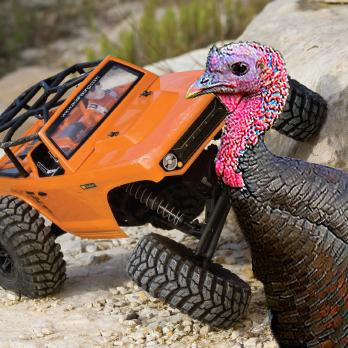 Happy Thanksgiving! Here's a Turkey Attacking an Axial Deadbolt