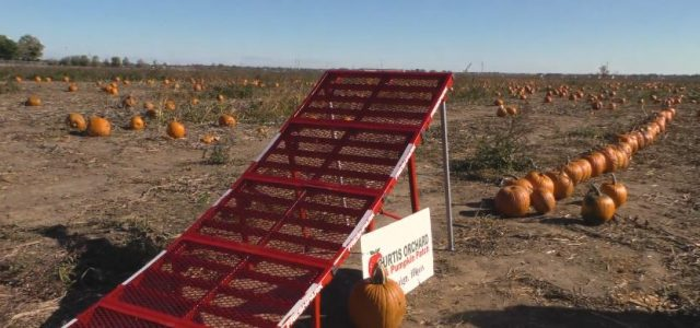 ARRMA Pumpkin Jumpin RC Antics [VIDEO]